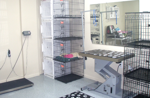 Affordable Dog Grooming Houston Tx